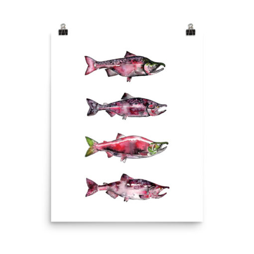 Salmon Watercolor Print
